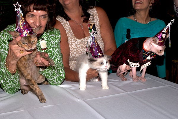cat-fashion-show-75