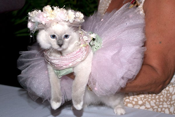 cat-fashion-show-21