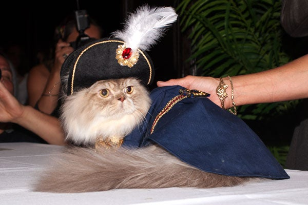 cat-fashion-show-38