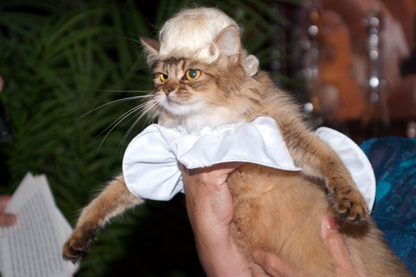 cat-fashion-show-32