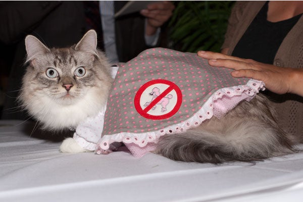 cat-fashion-show-57