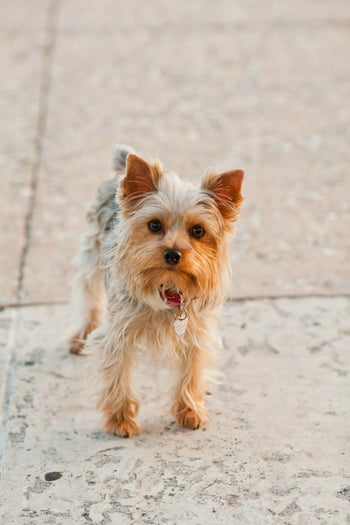 08-andy_lai_photography_refinery29_dogs_8