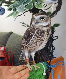 Owl Cafes Are Actually A Thing