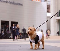 WATCH: R29's Dog-In-Residence Goes Shoe Stalking At NYFW