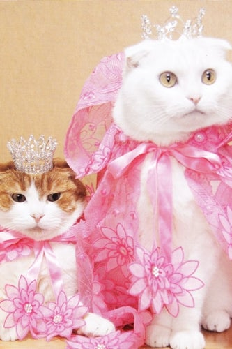 royal-wedding-cats