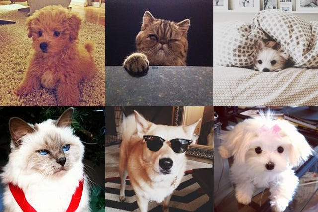 Think Your Pet Is The Cutest, Ever? PROVE IT!