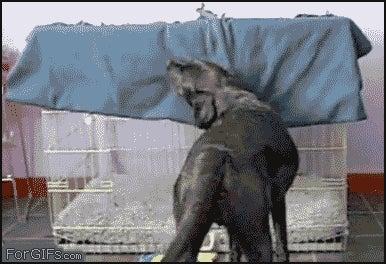 dog-pulls-blanket