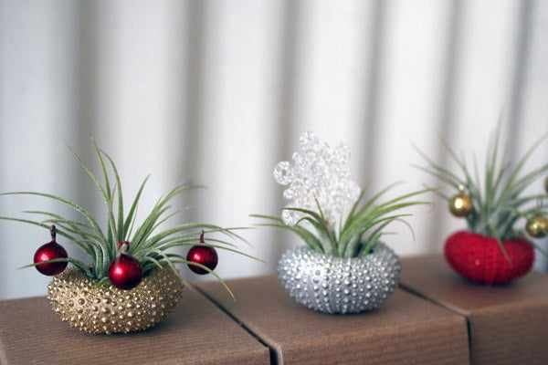 Peacock-Taco-Holiday-Air-Plants_Etsy_42