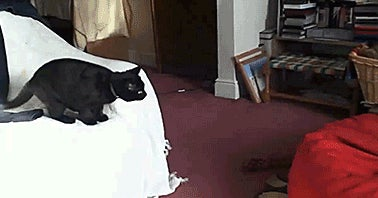 cat-jumps-into-bean-bag-chair-13668470915